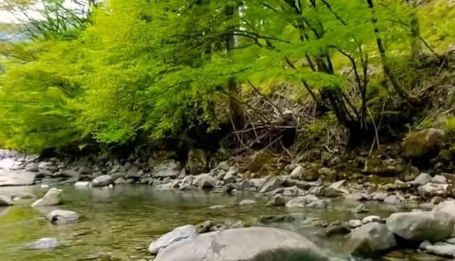 渓流で発見した衝撃的な光景.jpg