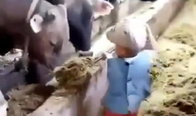 牛舎のお手伝いをする感心な少年.png