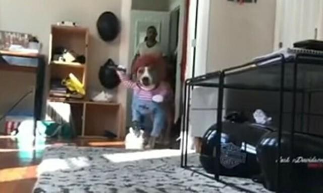 犬が二足歩行でナイフを持って迫って来る.jpg