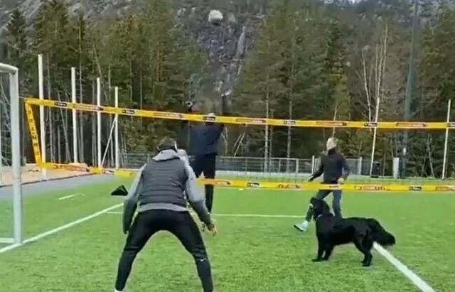 犬のサッカーバレー.jpg