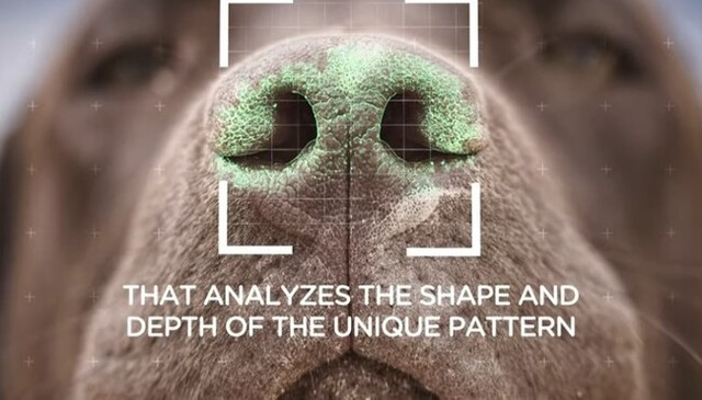 犬の鼻の形アプリ.jpg