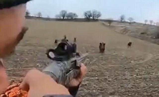 猟犬に追われて迫り来るイノシシをハンターが撃つ!.jpg