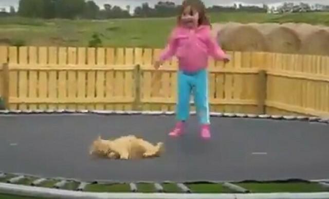 猫と女の子が一緒にトランポリンをやった結果www.jpg