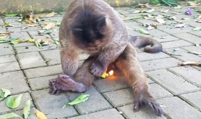猿がライターで火をつける.jpg