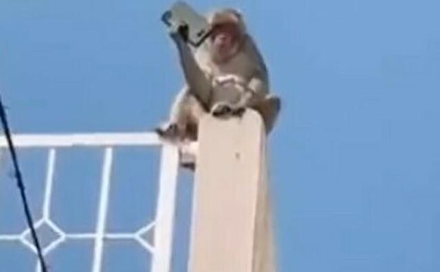 猿にスマホを盗られたら.jpg