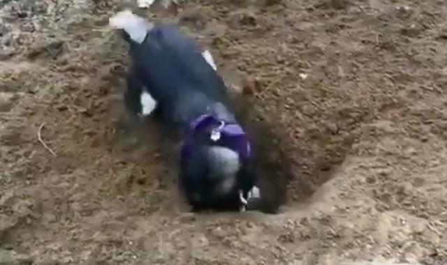 穴掘りに興奮しすぎたイヌ.jpg