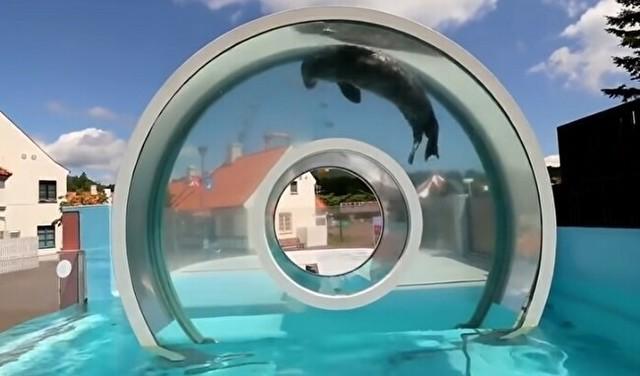立体的に鑑賞できるアザラシの水槽.jpg