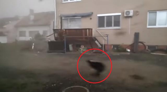 竜巻の強風の中を興奮して走り回る犬.png