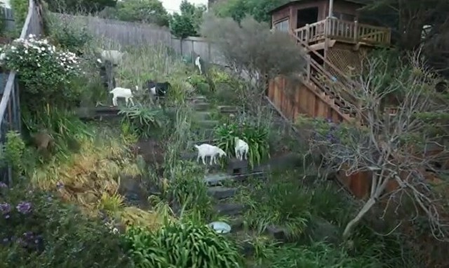 羊が草を食べる速度.jpg