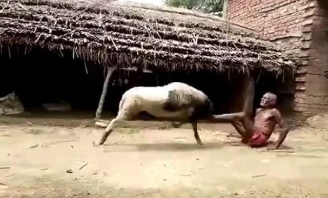 羊と戦う老人.jpg