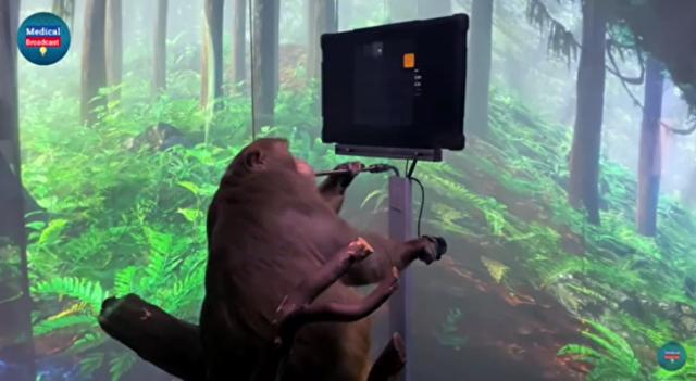 脳にチップを埋め込まれた猿がビデオゲームをする?.png