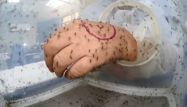 蚊に刺されるお仕事.jpg
