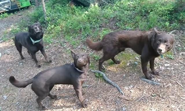 訓練された3頭のイヌのフリーズ.jpg
