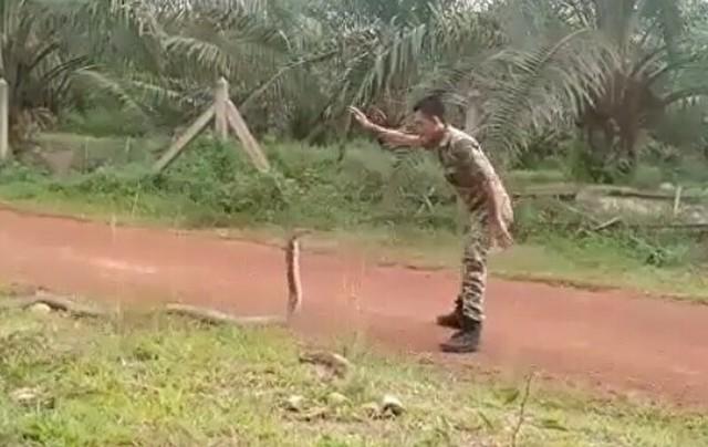 達人のコブラの捕まえ方.jpg