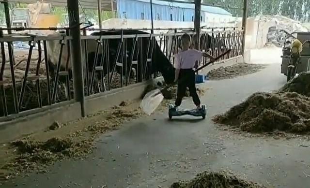 電動ボードで牛にエサやり.jpg