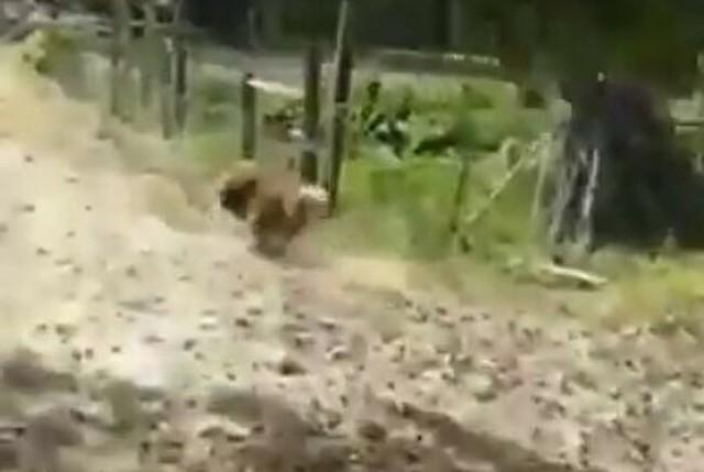 飼い主帰宅の喜びでゲッダンダンスのイヌ.jpg