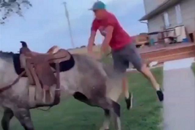 馬の後ろから飛び乗ろうとして思い切り蹴り上げられた男.png