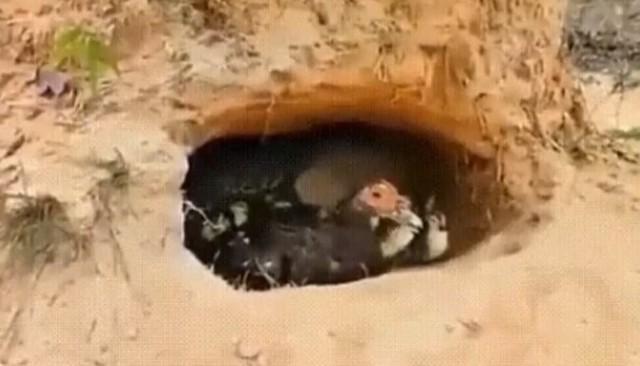 鳥の巣穴にワニが.jpg