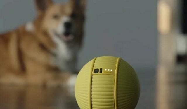 黄色いボールで室内を管理.jpg