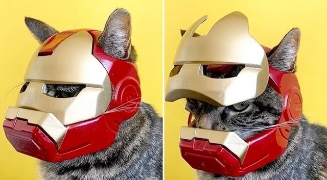 3Dプリンターでネコ用のヘルメットやアイアンマンのマスクを作った.jpg