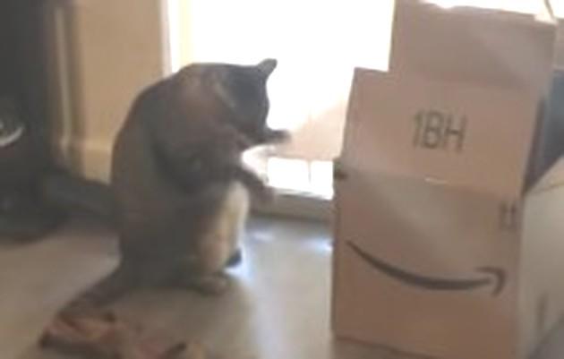 ネコの段ボールドラム