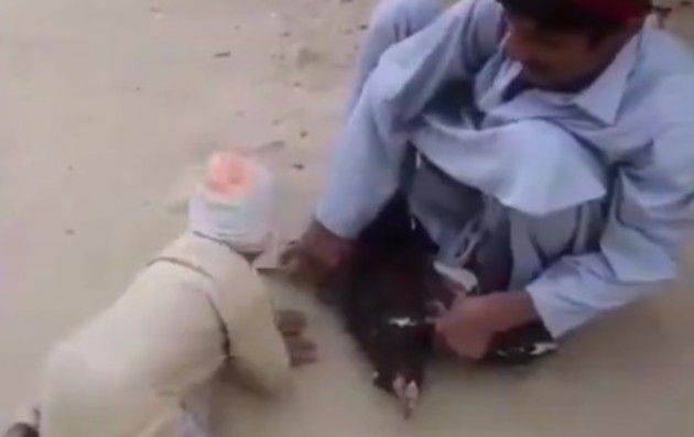 ニワトリを救う少年