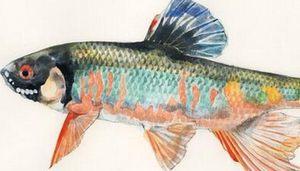魚拓画家の絵