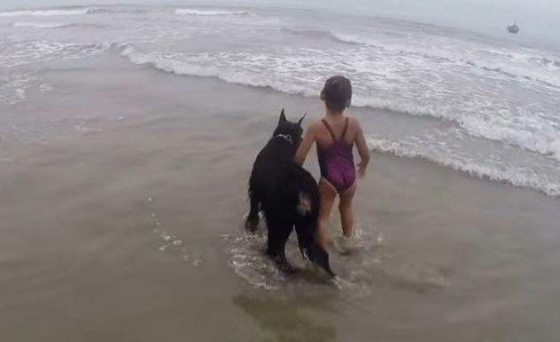 海で少女を守るイヌ