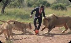 ライオンとサッカー