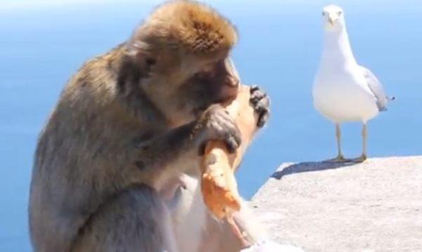 サルはバッグ位なら簡単に開ける (2)