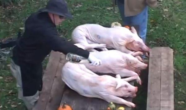 3匹の小豚の丸焼き