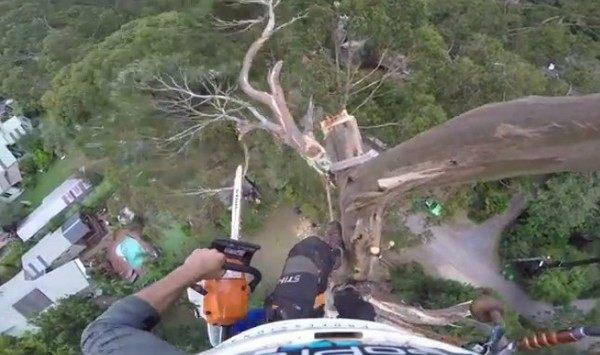 高い木を切り落とす