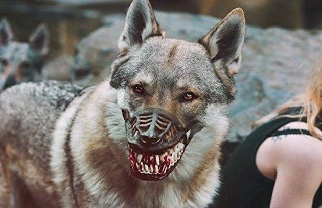 怖い犬のマズル
