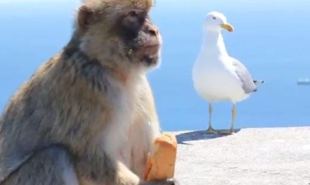サルはバッグ位なら簡単に開ける (4)