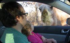 ラクダと幼女
