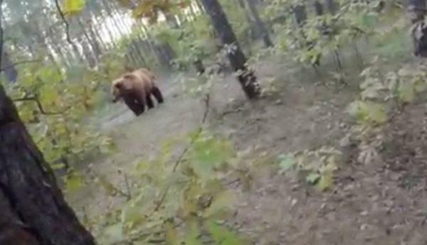 クマに追われる自転車ライダー