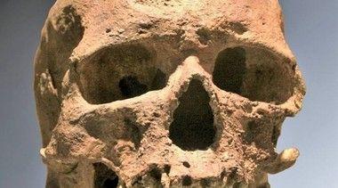 クロマニョン人の顔の復元