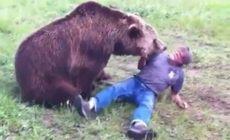 人が動物に襲われる瞬間の映像、コンピレーション