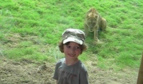 動物園での子供と動物のコンピレーション