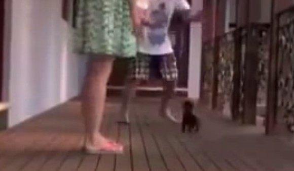 女性を守る小さな番犬