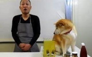 柴犬のマリ君、冷奴編