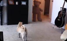 クマに驚かされたパグ犬
