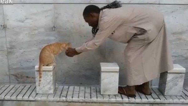 ネコに水をやるメッカのアラブ人