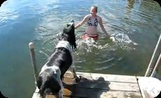 水に飛び込む決断を迫られる犬