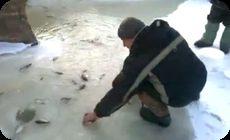 サカナが湧き出す不思議な池