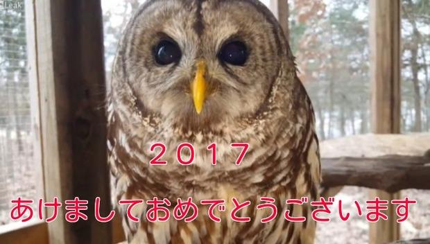 2017あけましておめでとうございますフクロウ