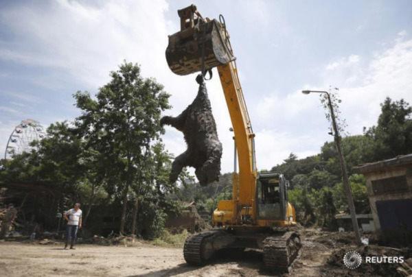 グルジアの洪水で吊るされるクマ