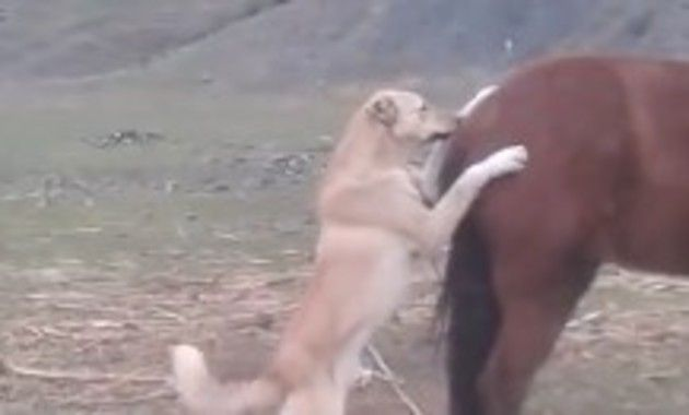 馬に蹴られる犬