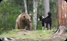 クマ犬の作り方