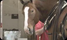 馬の生産者の悲しみ。ドナドナ